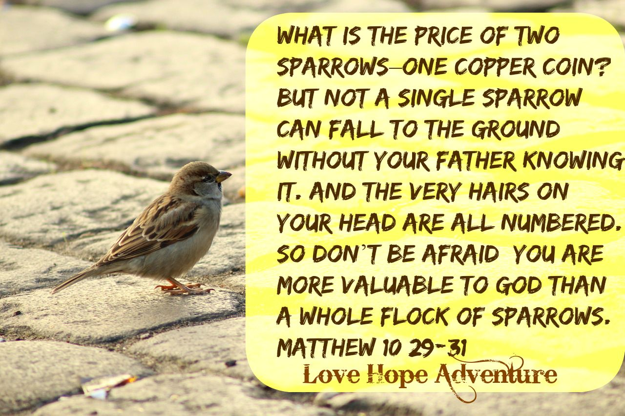 you are more valuable to God than sparrows